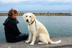 Etablir une relation de confiance avec votre chien : ce qu'il faut savoir
