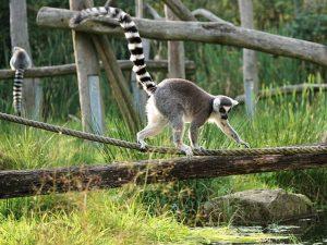 voyage avec un chauffeur guide à Madagascar